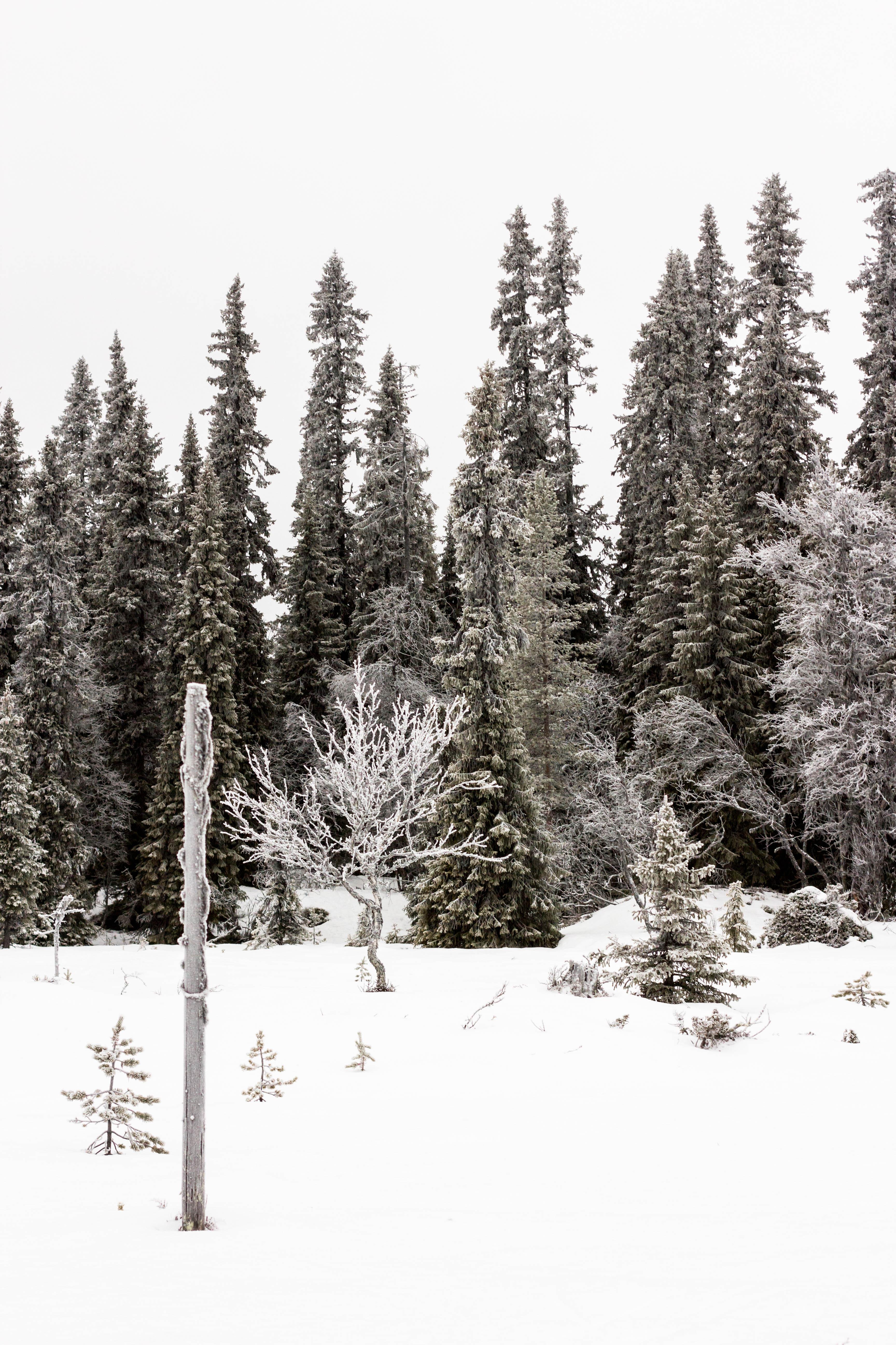 Fotografi af Nina Marquardsen - Vinter i sverige 2017