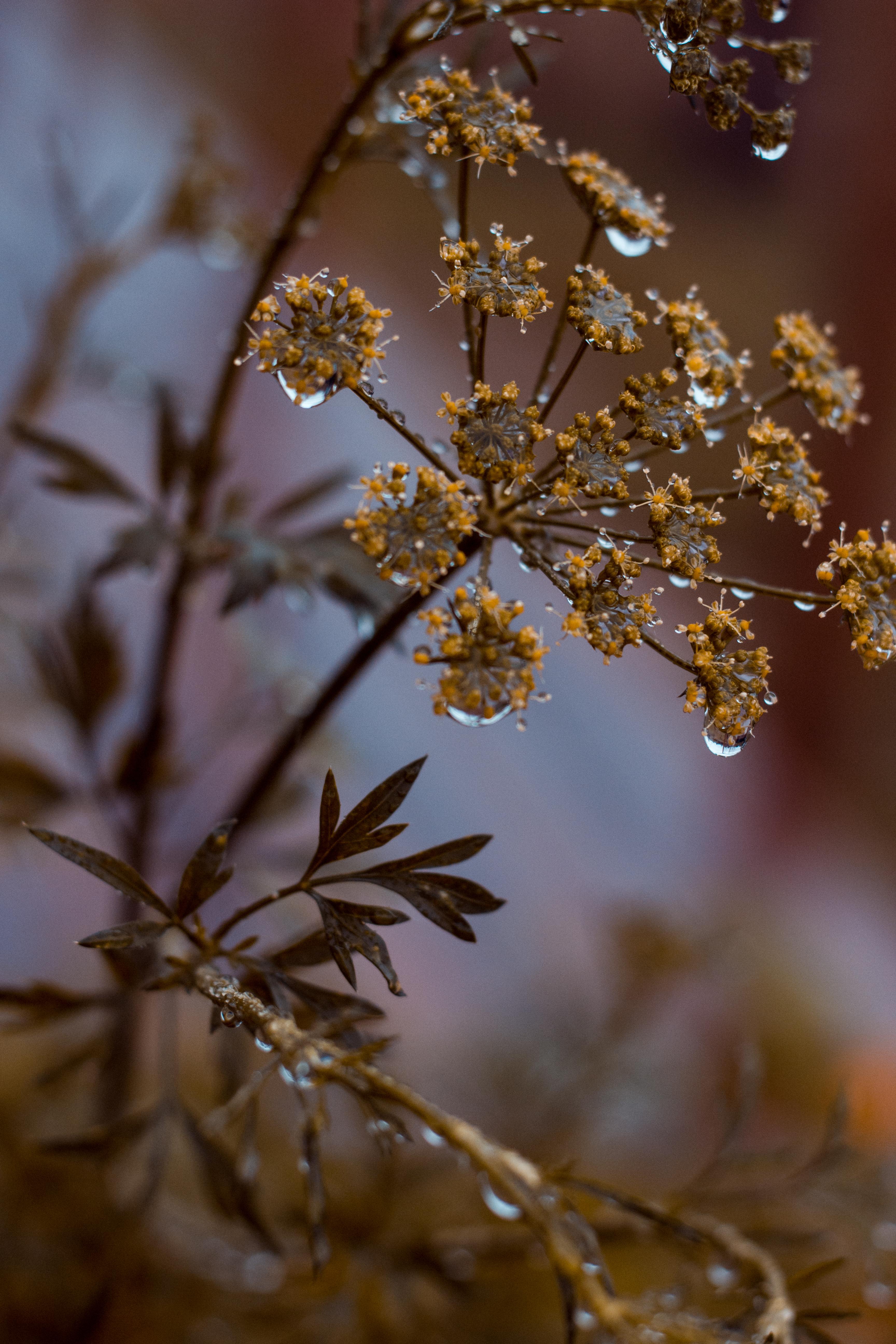 Fotografi af Nina Marquardsen - morgendug