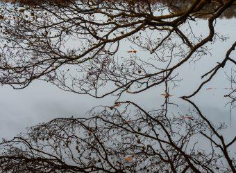 Fotografi af Nina Marquardsen - Bøgeskov ved Gurre