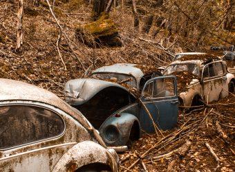 Nina Marquardsen Fotografi - Beetle Graveyard
