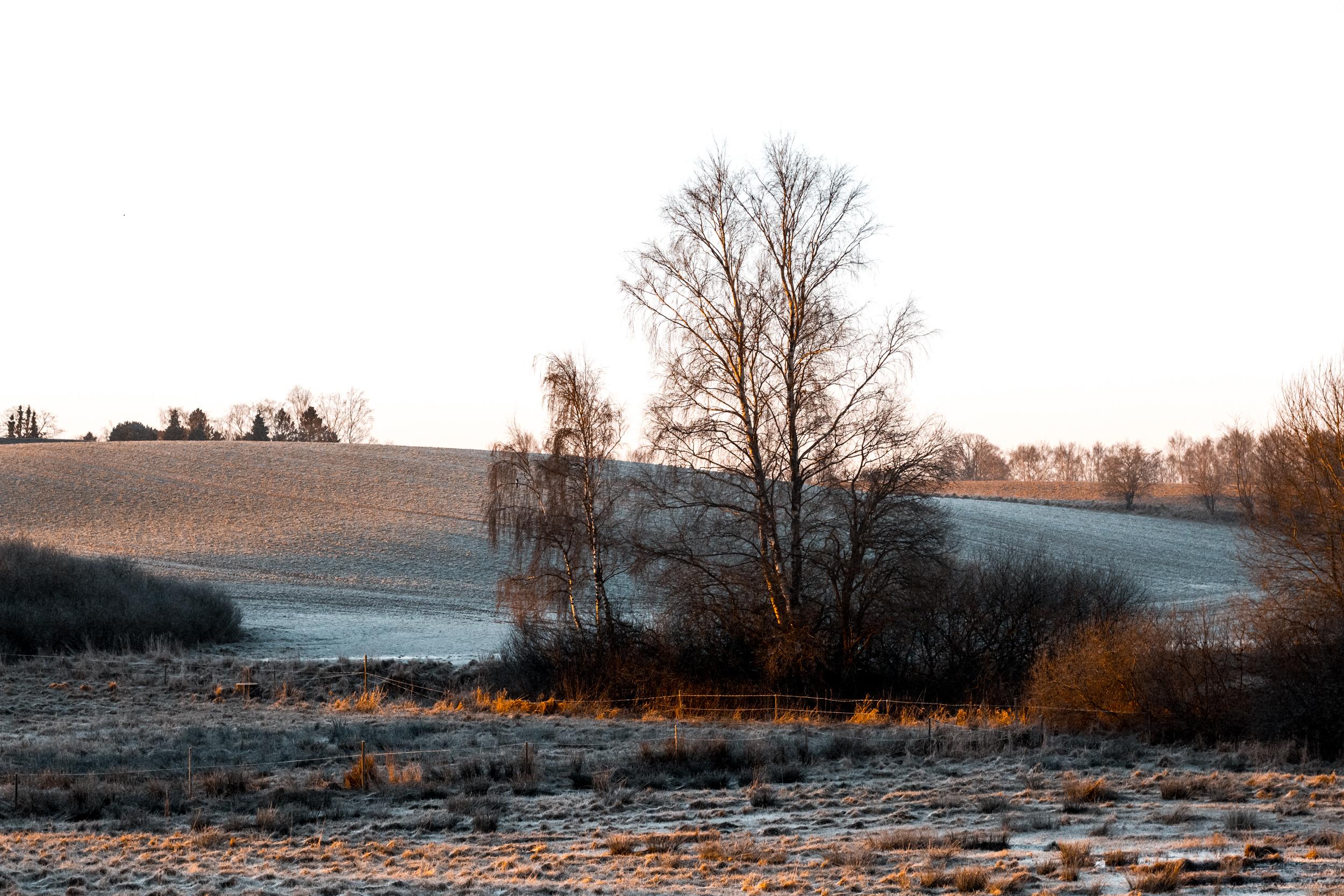 Nina Marquardsen - Om at blogge - januarfrost