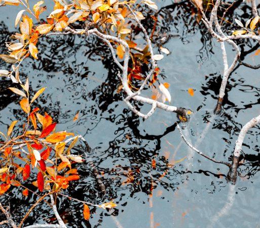 Billeder fra efterår i fjeldet