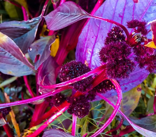 Nina Marquardsen - planter - planetoid