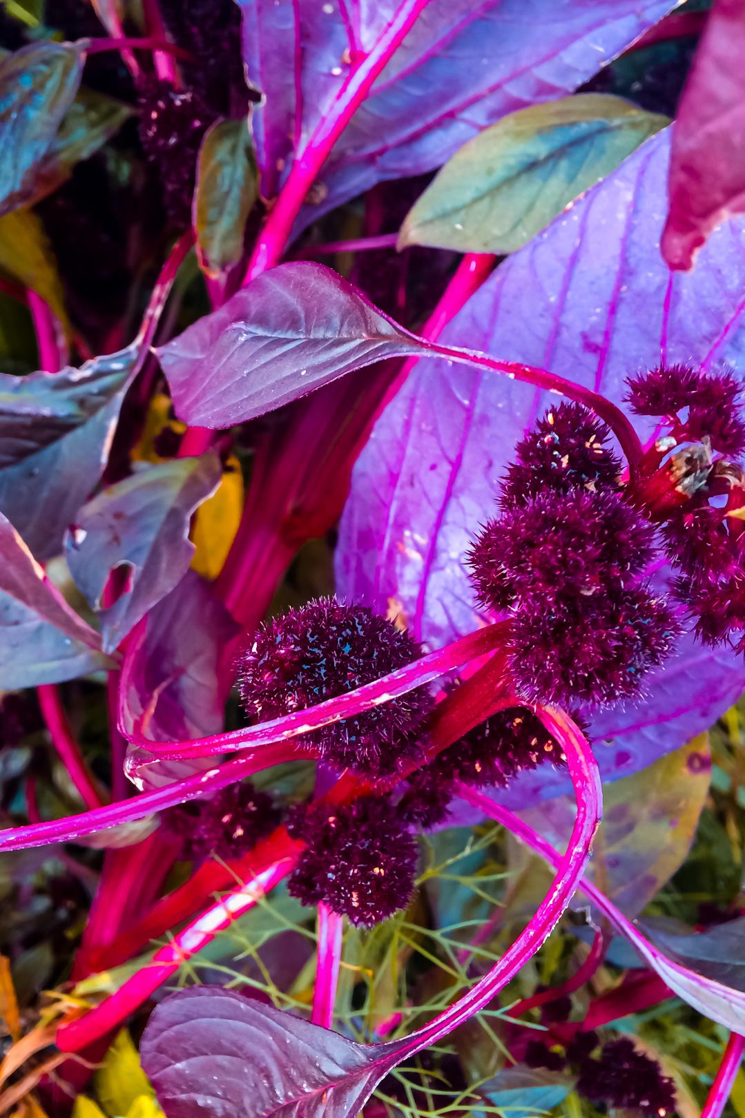 Nina Marquardsen - planter - plantetid