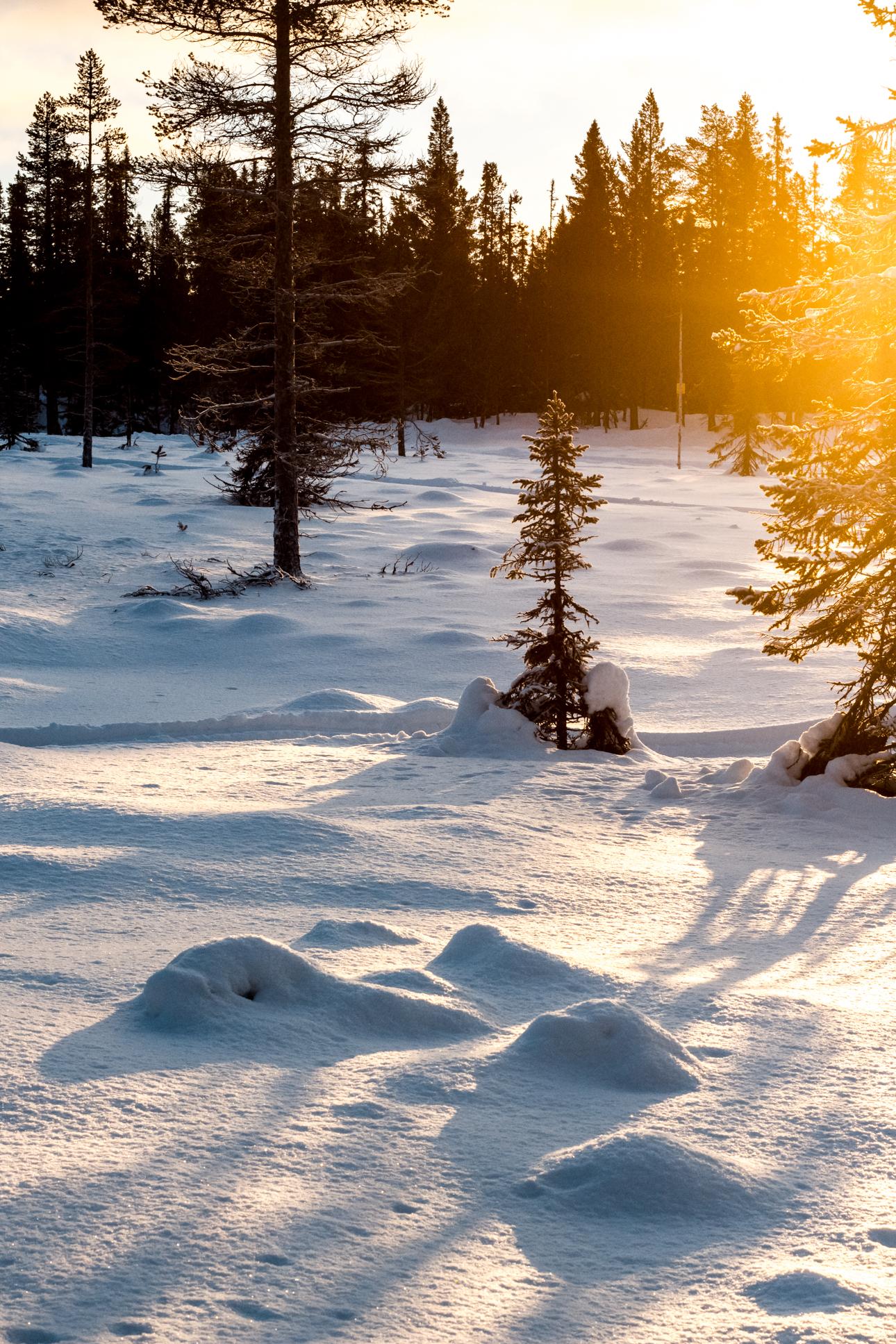 Nina Marquardsen - lavthængende vintersol og skitur